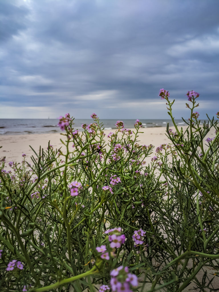 A PHOTO LOVERS GUIDE TO ÖSTERLEN IN SOUTHERN SWEDEN 38